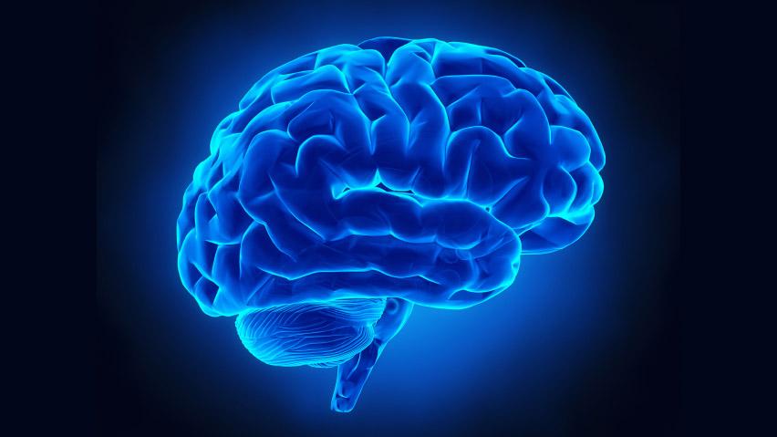 Mente & Cervello 49 – Gennaio  2009