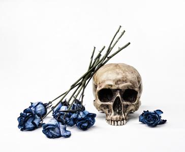 Bailey_skulls