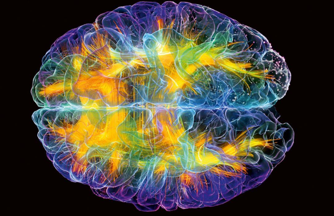 Il cervello universale
