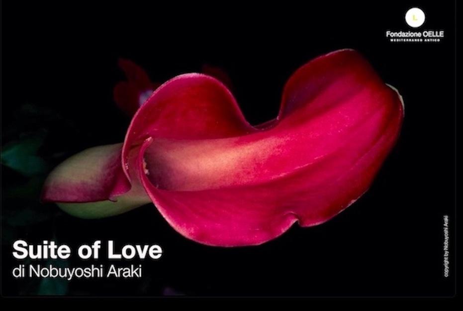 La rosa, il respiro
